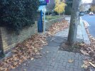 Huge amount of leaves. Hazard to pedestrians. Outside No 18.